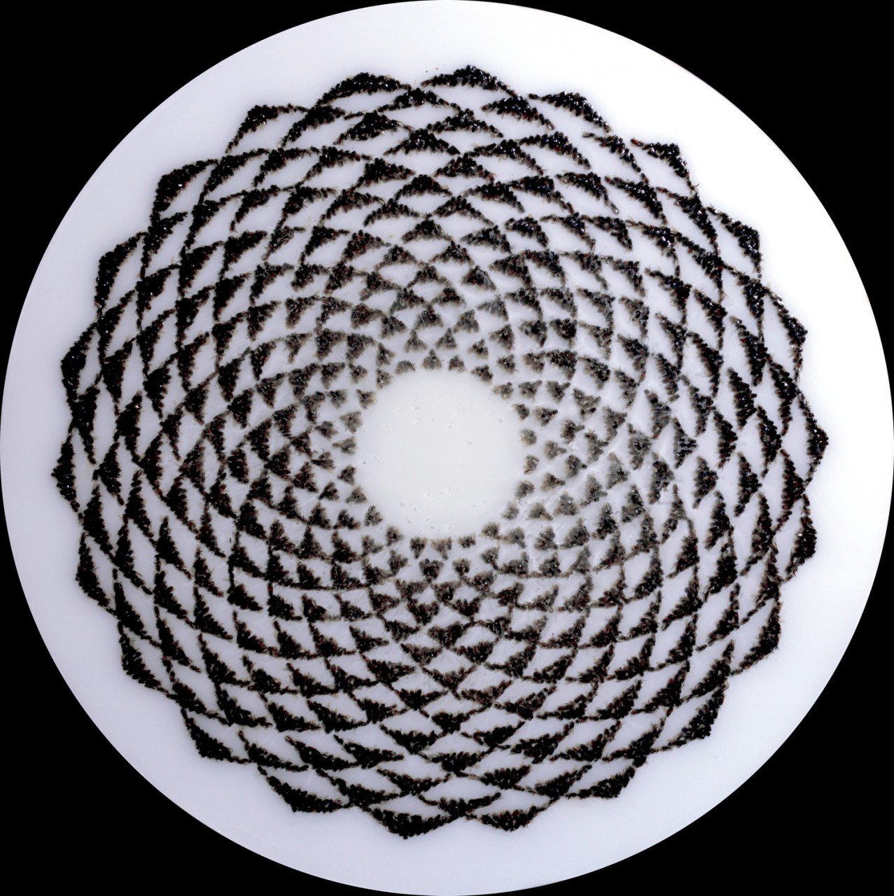 "Circle 1, 2013, 36"" x 36"""