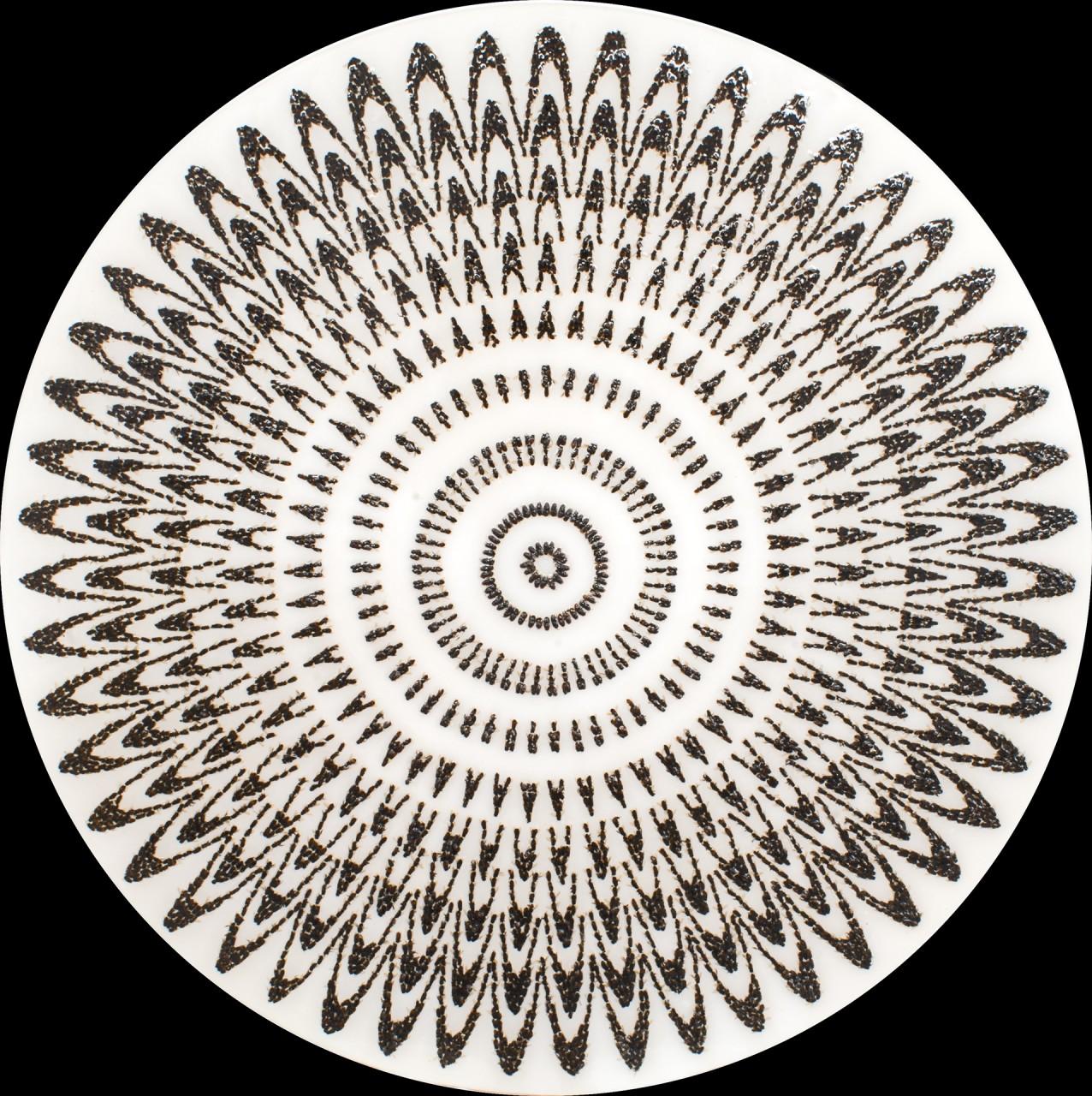 """Cercle 4, 2014, 48"""" x 48"""""""